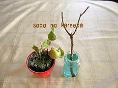 祖母の枯れ枝