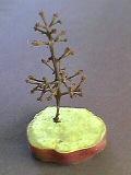 葡萄の木.jpg