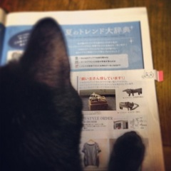 ネコみるネコ